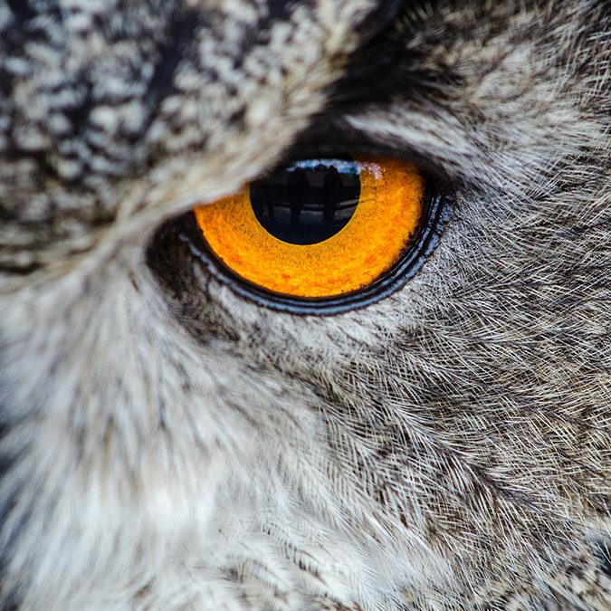 gray-owl-showing-orange-and-black-left-eye-148275